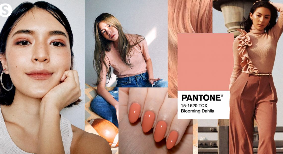 Blooming Dahlia สีส้มอมชมพู ที่สาวๆหลงรักอย่างต่อเนื่อง