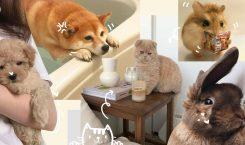 น้อลลล^^ แนะนำสัตว์เลี้ยงตัวเล็กๆ เพื่อนแก้เหงาเมื่อต้องอยู่คนเดียว